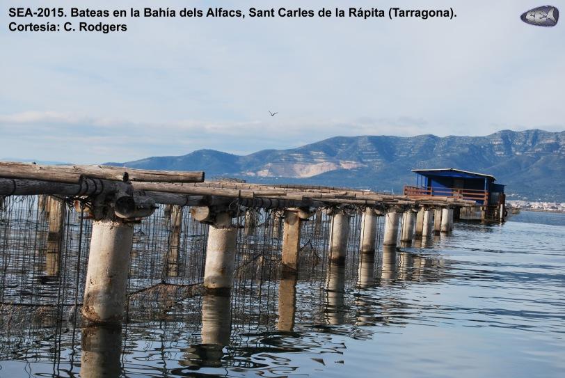 Batea_Bahía de Alfacs_SEA-2015
